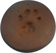 clay-paw-print