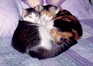 2 cats curled up