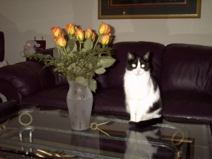 Jazzy the cat sitting properly next to a boquet of flowers